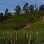 より美味しいチリワインは、カサブランカバレー(Casablanca Valley)とレイダ(Leyda)地方。