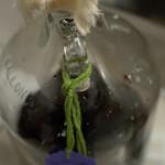 残ったワイン、レストランではどのように使われているのか?