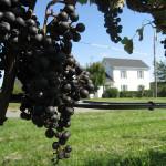 成長が目覚しいアメリカ・ヴァージニア州のワイン。